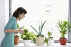 комнатные растения полив
